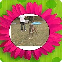 Adopt A Pet :: KOKO - KELLYVILLE, OK