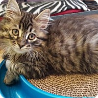 Adopt A Pet :: Sonny - Waxhaw, NC