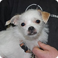 Adopt A Pet :: Fawn - Brooklyn, NY