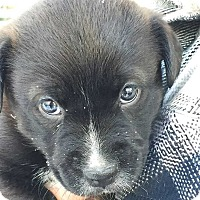 Adopt A Pet :: Quinn - E. Greenwhich, RI