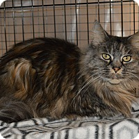 Adopt A Pet :: Allie - Colville, WA