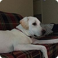 Adopt A Pet :: Brady - Austin, TX