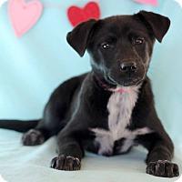 Adopt A Pet :: Lea - Waldorf, MD