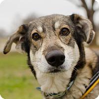 Adopt A Pet :: Rosaline - Greenwood, SC