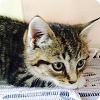 Adopt A Pet :: Dawn - Long Beach, NY