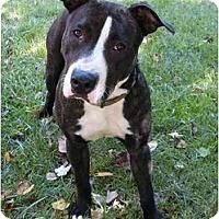 Adopt A Pet :: Xena - Mocksville, NC
