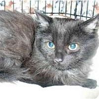 Adopt A Pet :: Chucky - Colmar, PA