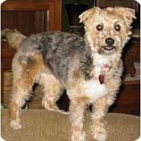 Adopt A Pet :: Cuddles - Conroe, TX