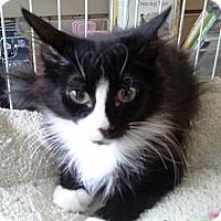 Adopt A Pet :: Brianna - Raritan, NJ