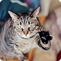 Adopt A Pet :: Cassie - Markham, ON