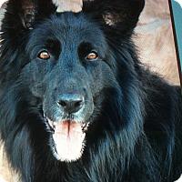 Adopt A Pet :: RUBY VON RIESLING - Los Angeles, CA