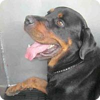 Adopt A Pet :: A383549 - San Antonio, TX