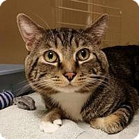 Adopt A Pet :: Lorenzo - Worcester, MA