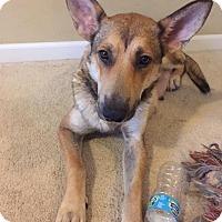 Adopt A Pet :: Ireland - Nashua, NH