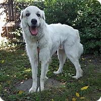 Adopt A Pet :: Martin - Duncanville, TX