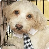 Adopt A Pet :: George 4 - Aurora, CO