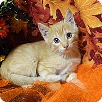Adopt A Pet :: Casper - Columbus, NE
