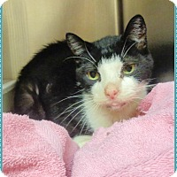 Adopt A Pet :: TAHOE - Marietta, GA