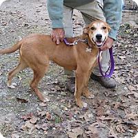 Adopt A Pet :: Olive - Oakland, AR