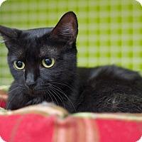 Adopt A Pet :: Anastasia - Troy, MI