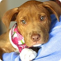 Adopt A Pet :: Britt - West Grove, PA