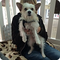 Adopt A Pet :: Gina - Thousand Oaks, CA