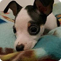 Adopt A Pet :: Terry - Toledo, OH