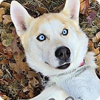 Adopt A Pet :: Madeline - Carrollton, TX