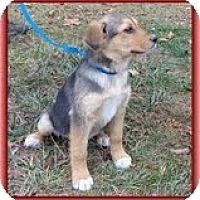 Adopt A Pet :: Jasmin - Staunton, VA