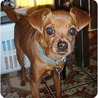 Adopt A Pet :: Tiny Bit - Lake Forest, CA