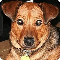 Adopt A Pet :: Nika - Gilbert, AZ