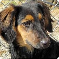 Adopt A Pet :: Dexter - San Jose, CA
