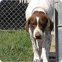 Adopt A Pet :: Gracie - Meridian, ID