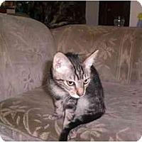 Adopt A Pet :: Carson - Lombard, IL