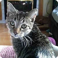 Adopt A Pet :: Libbie - Kohler, WI