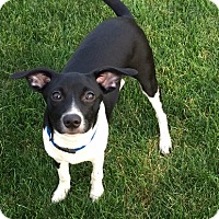 Adopt A Pet :: Sam - Beavercreek, OH