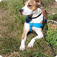 Adopt A Pet :: BUSTER ~pending - Sterling, MA