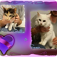Adopt A Pet :: Callie & Snow - Corinth, NY