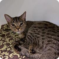 Adopt A Pet :: Roxy - Parma, OH