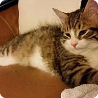 Adopt A Pet :: Gilbert - Toronto, ON