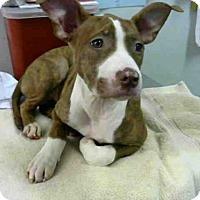 Adopt A Pet :: BONNIE - Atlanta, GA