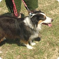 Adopt A Pet :: Snickers - Umatilla, FL