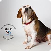 Adopt A Pet :: Nancy - Alexandria, VA