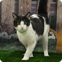 Adopt A Pet :: Daisy - Lebanon, MO