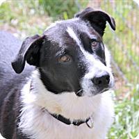 Adopt A Pet :: Sylas - Loxahatchee, FL