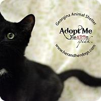 Adopt A Pet :: Shilo - Keswick, ON