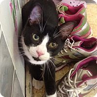 Adopt A Pet :: Mr. T - Toronto, ON