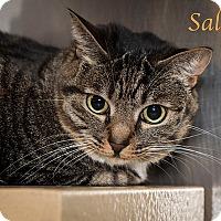 Adopt A Pet :: Sally - San Juan Capistrano, CA