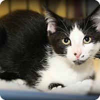 Adopt A Pet :: Xenon - Springfield, PA