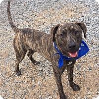 Adopt A Pet :: Lenny - Greensboro, NC